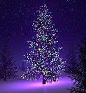 Christmas Tree Lighting - 02 December 2017