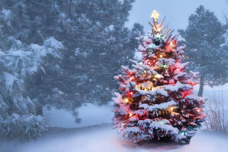 Christmas Tree Lighting - 01 December 2018