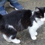 FOUND: Black and White Cat - 22 September 2019